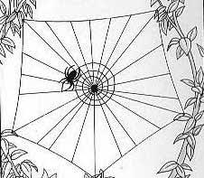 tpe les toiles d araignées et leur géométrie 2003 2004