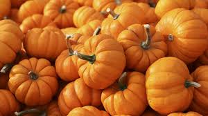 Live Oak Pumpkin Patch 2017 by Best Pumpkin Patches Near Chicago 2017