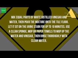how do you get urine smell out of tile floors