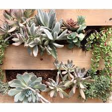 Pallet Garden Class Green Things Tucson 20 January