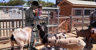 Pumpkin Patch Animal Farm In Moorpark California by Best Farm Tours In Southern California