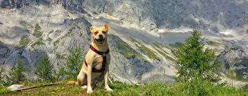 ferienhaus ferienwohnung mit hund in allgäu