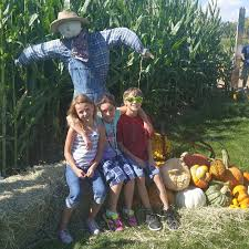 Pumpkin Patch Sacramento 2015 by Diana U0027s Pumpkin Patch U0026 Corn Maze 23 Photos Pumpkin Patches