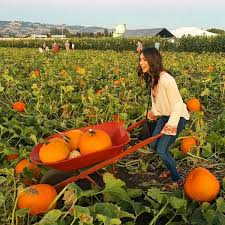 Pumpkin Patch Sf by Pumpkin Patches In The Bay Area Interactive Map