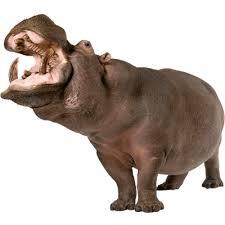 hippopotamus si鑒e social si鑒e social hippopotamus 28 images hippopotamus right