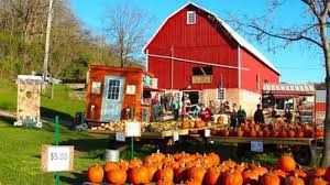 Pumpkin Patch Waco Tx 2015 by Corn Stalks Gourds Pumpkins And Fall Decorations