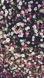 Pink white daisies floral iphone phone wallpaper background lock
