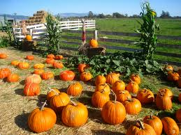Half Moon Bay Pumpkin Patches 2015 by 8 Exceptional Bay Area Pumpkin Patches U2013 Weekend Del Sol