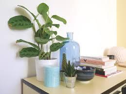 plantes pour bureau plante de bureau 28 images plante de bureau lifeimprover