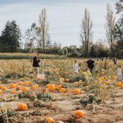 Pumpkin Picking Richmond by Richmond Country Farms 67 Photos U0026 34 Reviews Farmers U0027 Market