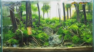 GenepoolAquarium Live Special : ACT Aquascape Contest 2015 - YouTube 329 Best Aquascape Images On Pinterest Aquarium Ideas Floratic Visiting Paradise At Shah Alam Planted Aquarium Aquascape Things Aquariums Aquascaping Malaysia Diy Pertama Kali Aquascaping October 2010 Of The Month Ikebana Aquascaping World Sumida Aquarium Reloaded Fish Tanks And Designs Awesome A Moss Experiment Its All About Current Low Tech Tank Cuisine Wonderful Small Cubical Styles Planted The Surreal Submarine Amuse