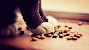 cat wont eat what to do when your cat won t eat cat