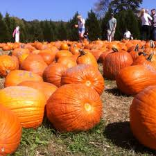 Pumpkin Farms In Georgia by Berry Patch Farm Cherokee County Georgia In Search Of The Great