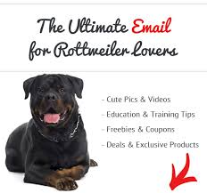 What Kind Of Dogs Shed The Most by How Bad Do Rottweilers Shed Advice From Real Rottweiler Owners