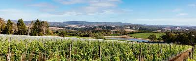 100 For Sale Adelaide Hills Cool Climate Wines Reaching New Heights