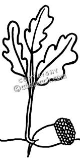 Acorn clipart sprout 7