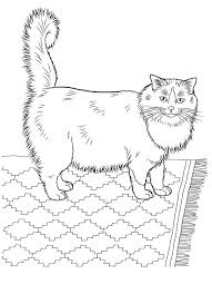 Kitten Coloring Pages For Adults Awesome 149 Best Cats And Kittens Images On Pinterest Collection
