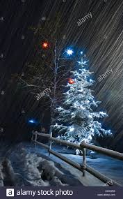 Fiber Optic Christmas Trees The Range by Awesome Picture Of The Range Christmas Tree Lights Fabulous