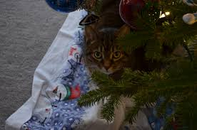 Menards Christmas Tree Stands by Merry U0026 Bright Kimberly Ah