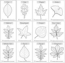 Best 25 Leaves Template Free Printable Ideas On Pinterest