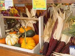 Pumpkin Patch Tacoma Wa by Scholz Farm And Garden Localharvest