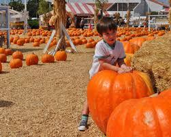 Mission Valley Pumpkin Patch by Ladera Kids Have Fun At Pumpkin Patch U2013 Orange County Register