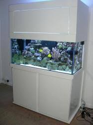 annonces aquariophilie aquarium d occasion pas cher et poissons
