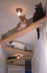 best 25 cat shelves ideas on pinterest diy cat shelves cat