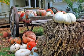 Free Pumpkin Farms In Wisconsin by Head To Wisconsin For Real Pumpkin Farms And The Osthoff Resort