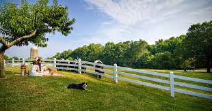 Bed And Biscuit Greensboro Nc by Dog Friendly Hotels Where Man U0027s Best Friend Is King