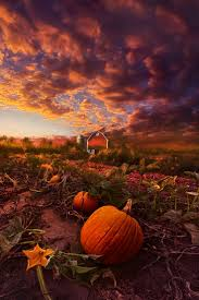 Pumpkin Patch Milwaukee by 324 Best Earth Terra Firma Images On Pinterest Scenery Nature