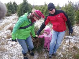 Where To Cut Your Own Christmas Tree In Michigan This Year Mlivecom
