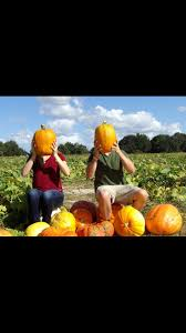 Bonita Springs Pumpkin Patch by Fall Pumpkin Patch Picture Accomplished Pinterest Fall