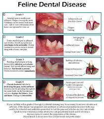 cat dental care your cat needs dental care