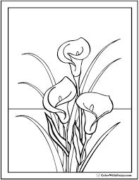 Calla Lilies To Color