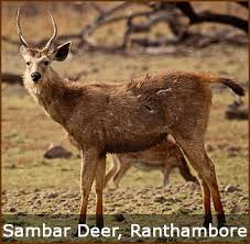 Wildlife Tour packages From delhi, unique holiday trip, wildlife Tiger Safari tour, Bharatpur Birds Waching Tour,Bharatpur Birdswaching tour, Birding tour Bharatpur, Keoladeo Ghana National Park tour, Bharatpur Bird Sanctuary tour,Bird Watching Tour india,Jim-Corbett Weekend Tour Packages, Corbett wildlife Unique holiday trip, india corbett wildlife tour, Corbett tiger safari tour, india wildlife tour packages,India Tour Package, India Tour From Delhi,Corbett National Park Tour packages,- Jim-Corbett Trip From delhi,wildlife tour india, car Rental Delhi,India Tour Package, India Tour Package From Delhi, Rajasthan Tour Package From Delhi, Taj Mahal Tour From Delhi- wildlife tour,Corbett national park tour india- Corbett wildlife Tour from delhi- JimCorbett National Park tour from delhi-Corbett tour packages- corbett tour- Carhireindelhi