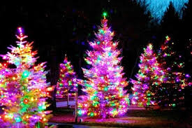 Bright And Colorful Christmas Trees