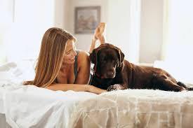 wo soll mein hund schlafen das musst du unbedingt beachten