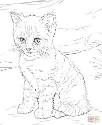 Cute Kitten Coloring Page With Pages Kittens