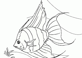 Angelfish Printable Coloring Sheet Realistic Kids Pages