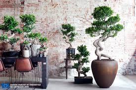 7 einfache tipps für den kauf und die pflege eines bonsai