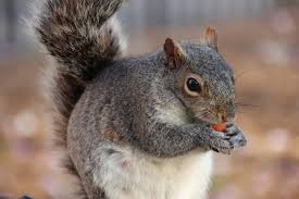 keep squirrels away from fall bulbs new today