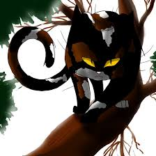 warrior cat warrior cats sol by whiteflamesoul on deviantart