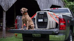 100 Truck Dog Kennels Let Your Dog Come Along For The Summer Ride With A Few Tips On