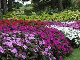 Flowers For Flower Beds by Water Wisely Annual And Perennial Flowers Yard And Garden News