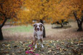 5 Dog Laws Every NYC Dog Lover Must Know | Do Female Dogs Get Periods How Often And Long Does The Period Dsc3763jpg The Best Retractable Dog Leash In 2017 Top 5 Leashes Compared Please Fence Me In Westward Ho To Seattle Traing Talk Teaching Your Come When Called Steemit For Outside December Pet Collars Chains At Ace Hdware Biglarge Reviews Buyers Guide Amazoncom 10 Foot With Padded Handle For Itt A Long Term Version Of I Found A Rabbit Wat Do