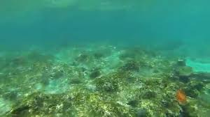 snorkeling with sea turtle at bathtub beach fl youtube