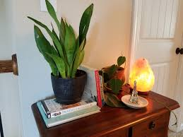 Grow Lamps For House Plants by Easy Houseplants For Beginners Happy Home Vibes