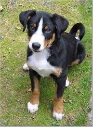 best 25 medium size dogs ideas on pinterest medium sized dogs