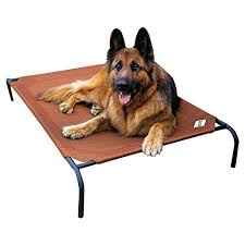 Coolaroo Dog Bed Large by Coolaroo Elevated Indoor Outdoor Large Pet Bed For Large Or Small